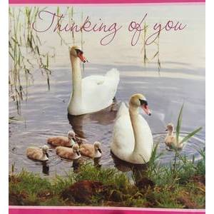 GREETING CARD - THINKING OF YOU (SWAN)